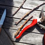 Grafting 101: Basic toolkit